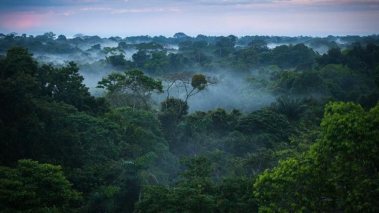 Wie vielfältig ist der Amazonas-Regenwald? Hier herausfinden